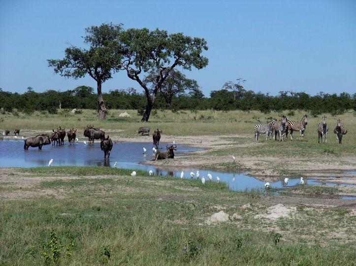 1024px-gnus_zebras_chobe_national_park