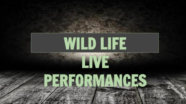 wild life short version epk (6).jpg